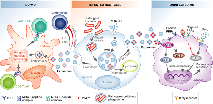 Exosomes And Other Extracellular Vesicles In Host Pathogen