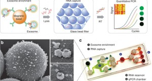 exosome as nanoscale vesicles Exosomes are extracellular vesicles secreted from  exocap™ is a kit for exosome isolation and  the role of isolation methods on a nanoscale surface.
