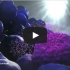 exosome rna