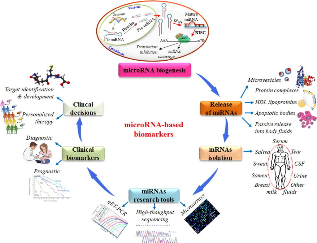 papers on stem cell research