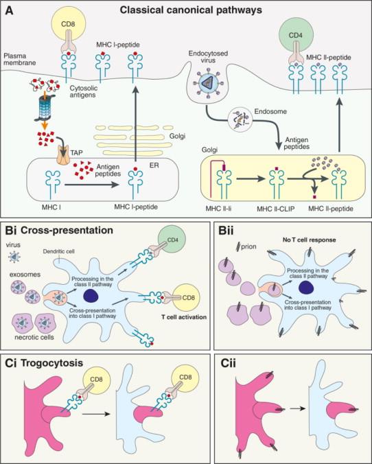 exosome-rna