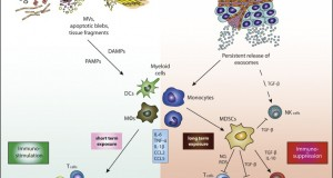 the role of inflammation in cancer biology essay Free biology papers, essays,  what is the role of biology in human behaviour  i believe that as a requirement to further specialization in cancer biology,.