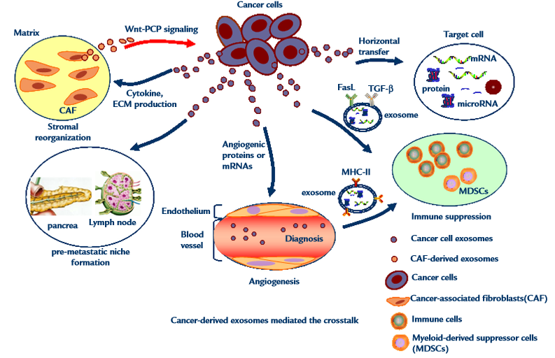 Potential Of Cancer Cell Derived Exosomes In Clinical
