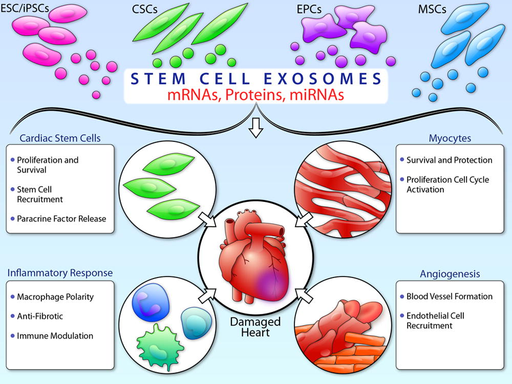 stem cell technology the controversies surrounding The political and ethical controversies surrounding embryonic research curtailed stem cell funding as a result, after a quarter century of research, bone marrow transplantation is the only fda-approved stem cell application in the united states.