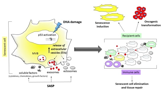 exosomes rna