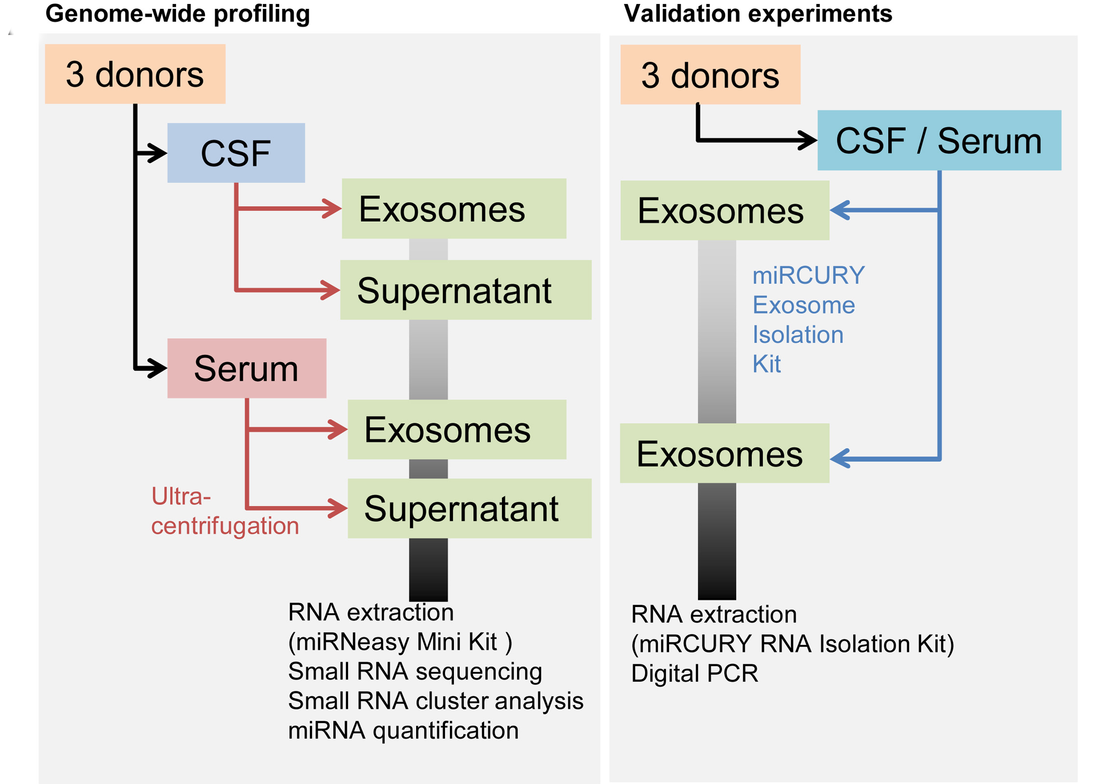 next generation sequencing based small rna profiling of cerebrospinal fluid exosomes exosome rna