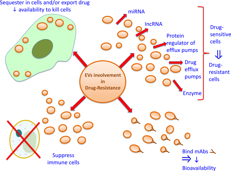 extracellular vesicles and anti cancer drug resistance exosome rna
