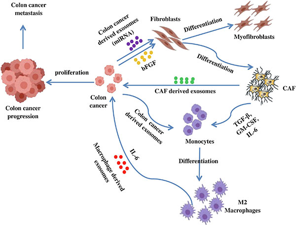 Crosstalk Among Colon Cancer Derived Exosomes Fibroblast Derived Exosomes And Macrophage Phenotypes In Colon Cancer Metastasis Exosome Rna